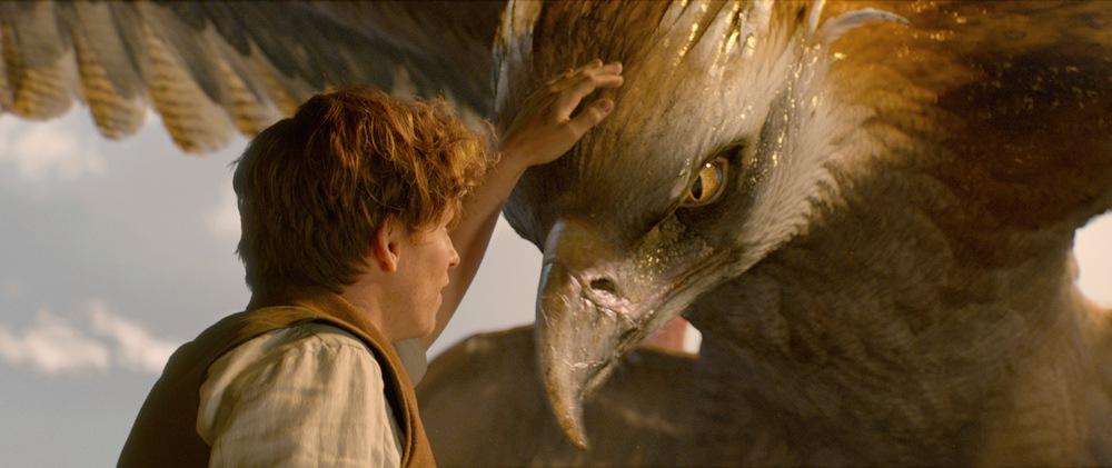 Fantastic Beasts Movie Review Daily Hive Dan Nicholls