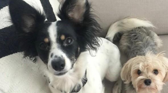 A van full of dogs was just stolen in Toronto
