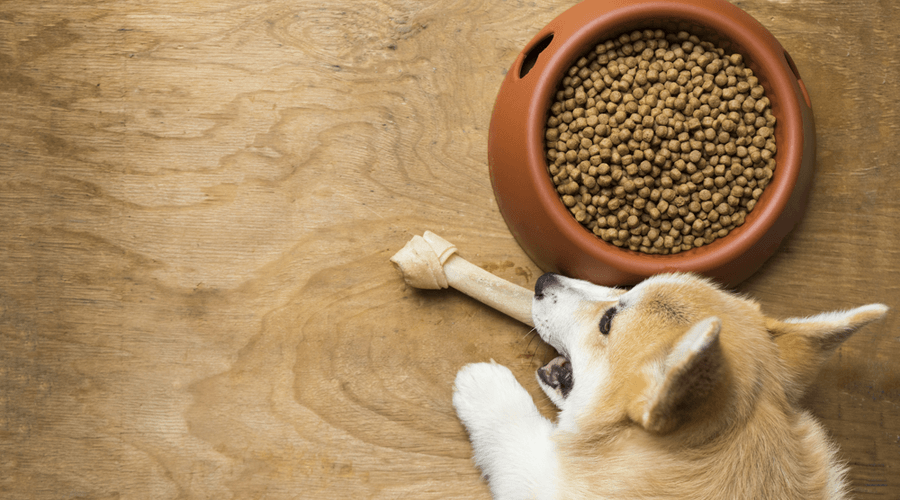 Pet food delivery takes the hassle out of healthy pet food choices