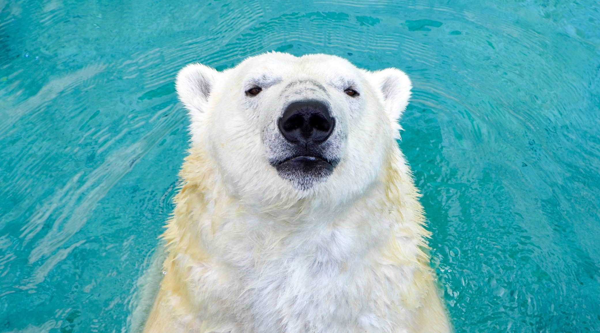 Polar bear sanctuary ontario 1