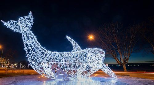Whale (Lumiere Vancouver/Facebook)