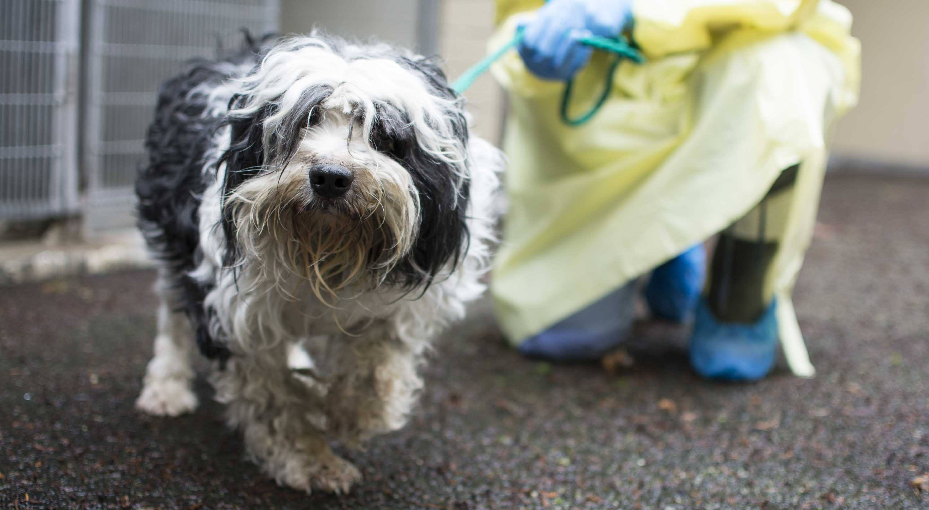 This dog was seized from a squamish breeder spca