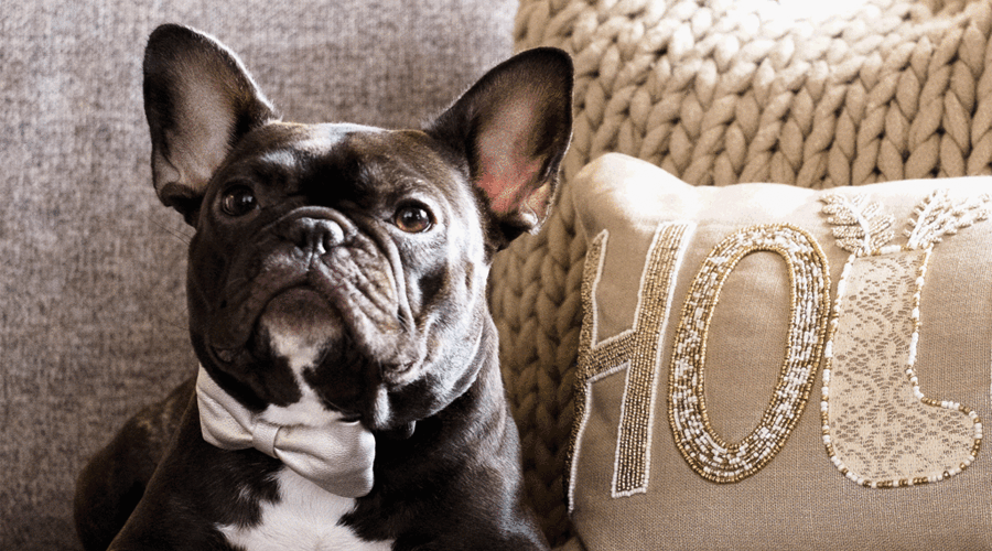 Gift guide: Presents for pets and pet lovers that give back