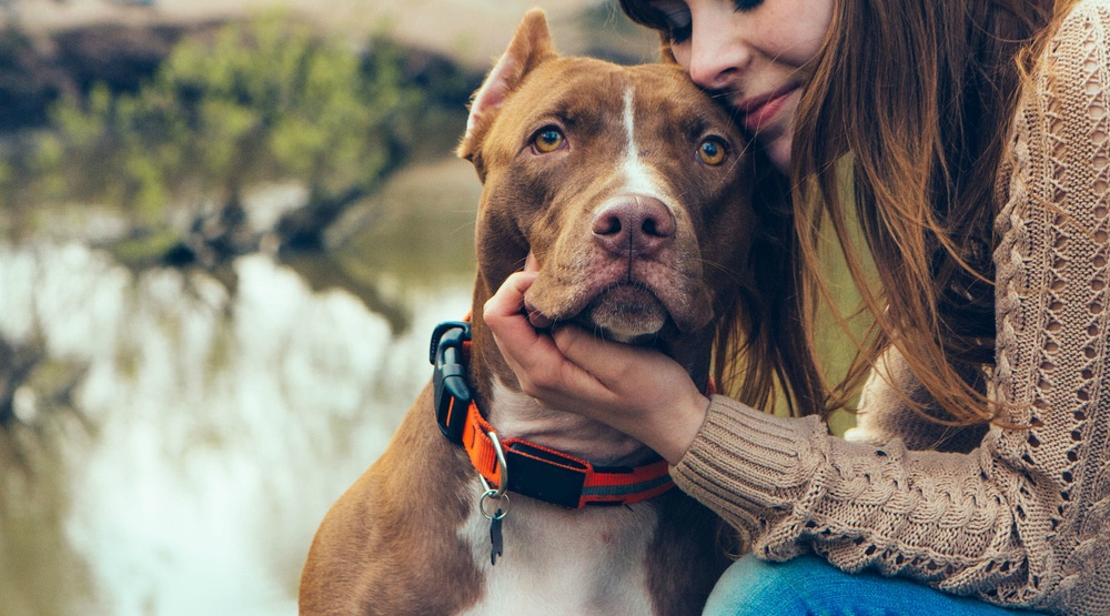 Montreal's pit bull ban is back on – now what?