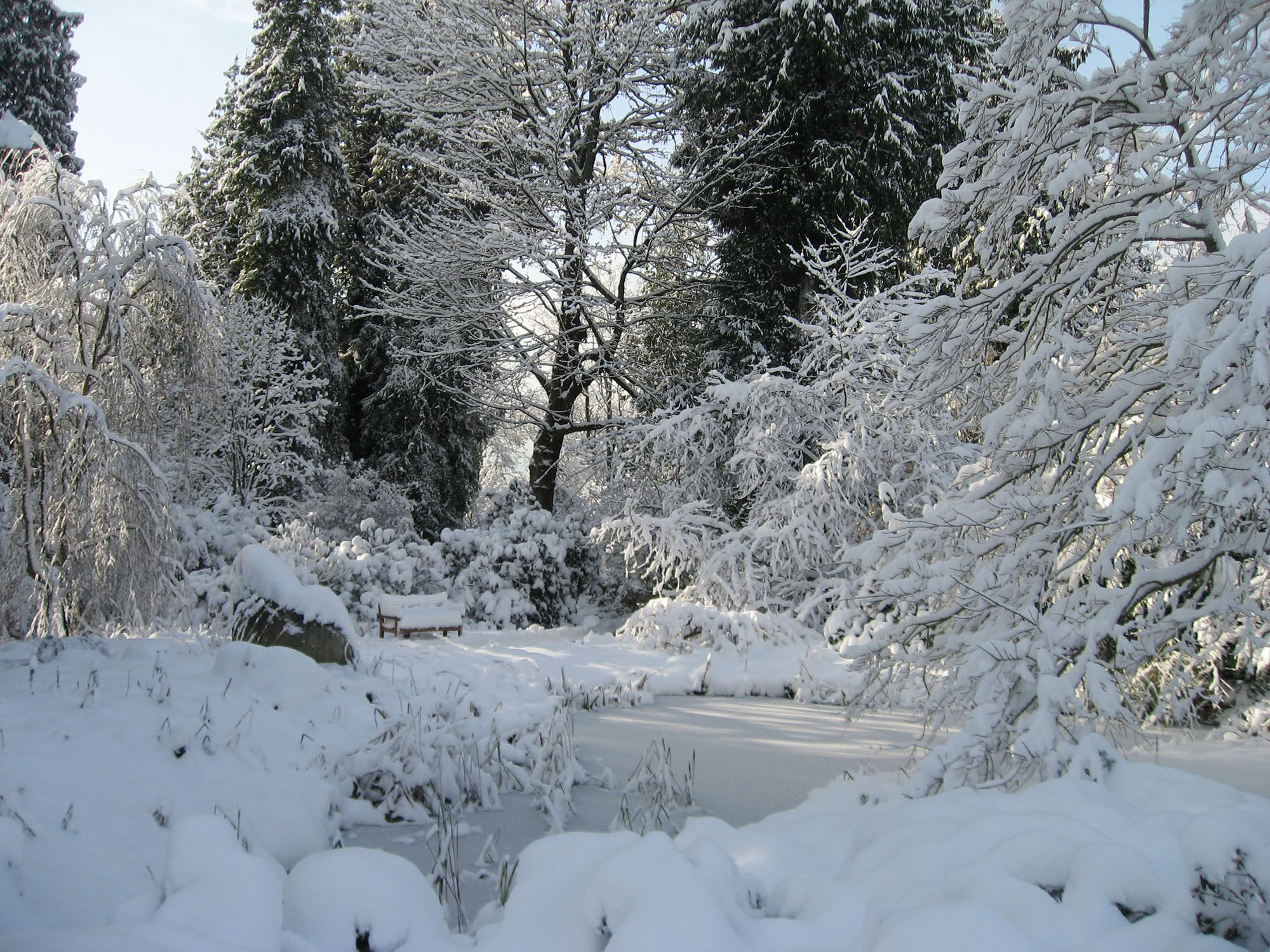 Snow in the UBC Botanical Garden (Wendy Cutler/Flickr)