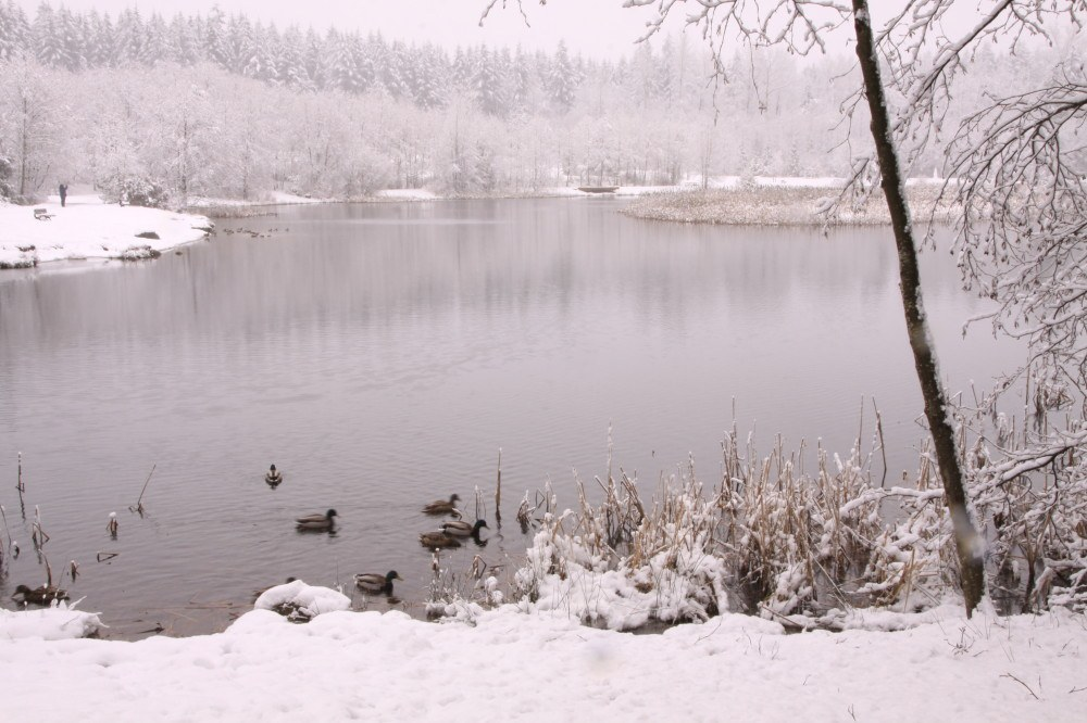 Green Timbers Lake in the snow (waferboard/Flickr)
