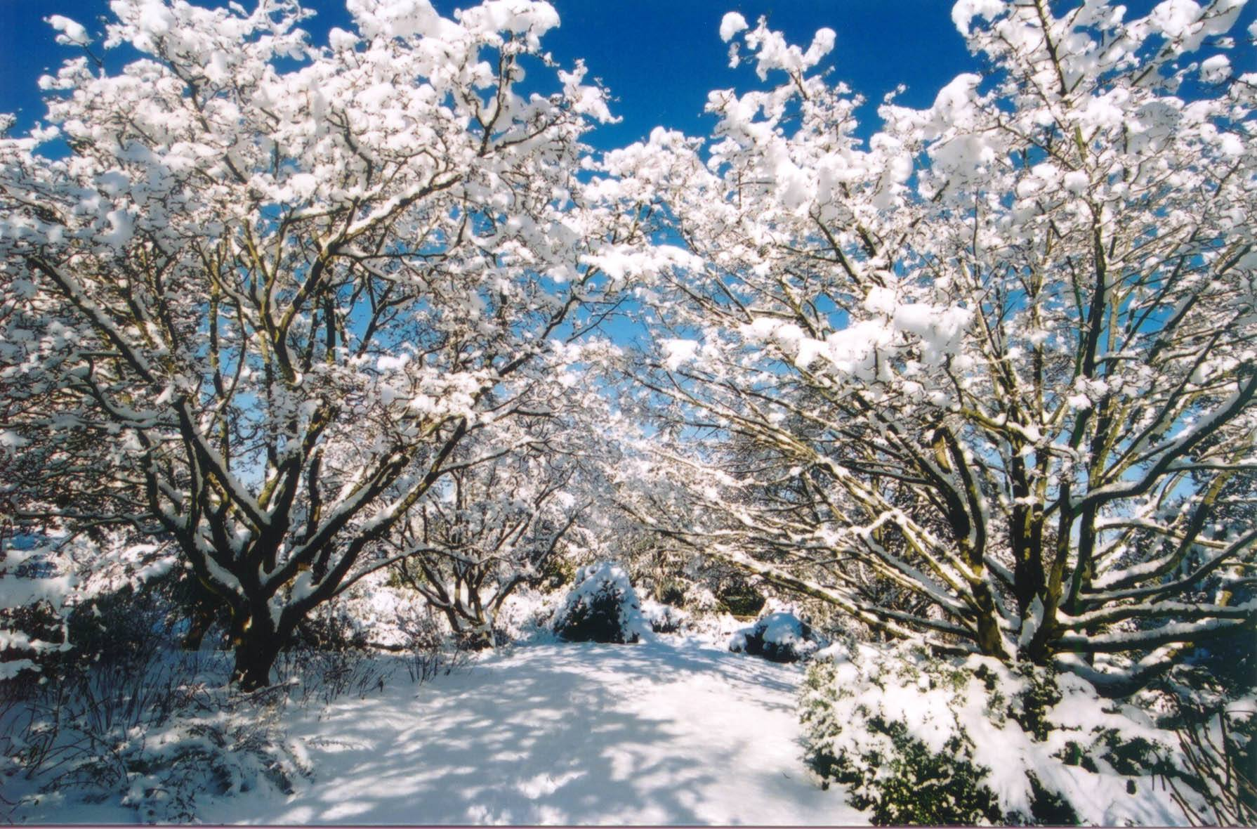 Snow at VanDusen Botanical Garden (VanDusen Botanical Garden/Facebook)