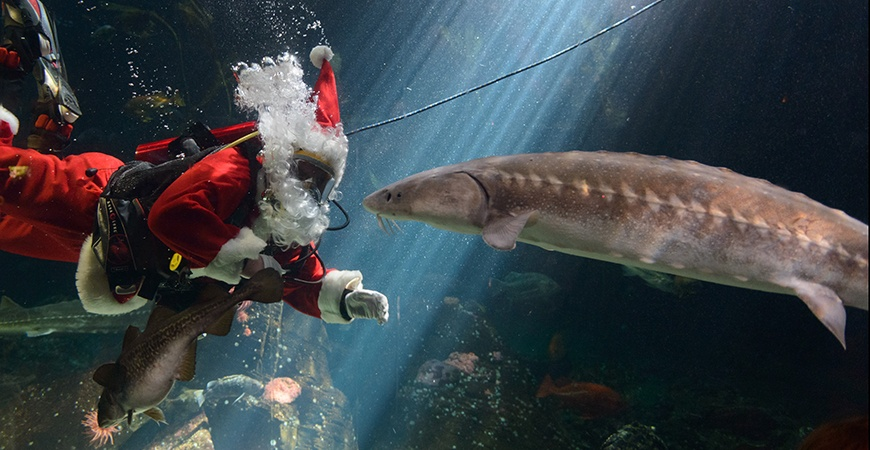 Scuba claus daily hive resize