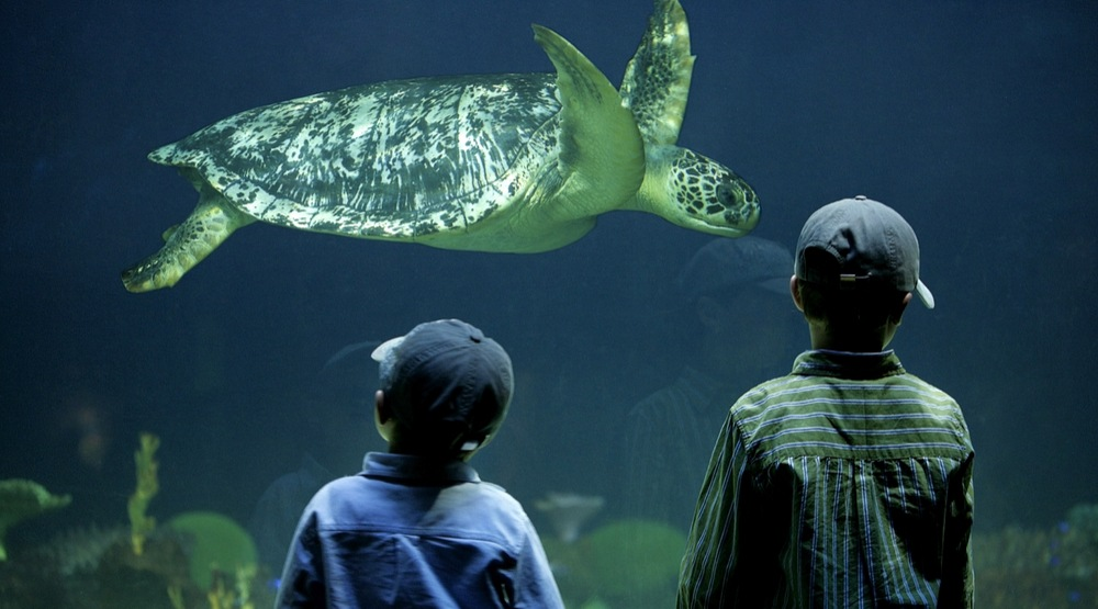 The Vancouver Aquarium is open on Christmas Day. (Image: Rainer Plendl/Shutterstock)