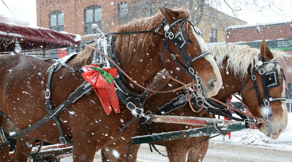 Christmas Horse Pictures.Enjoy A Free Horse Drawn Carriage Ride In Vancouver This