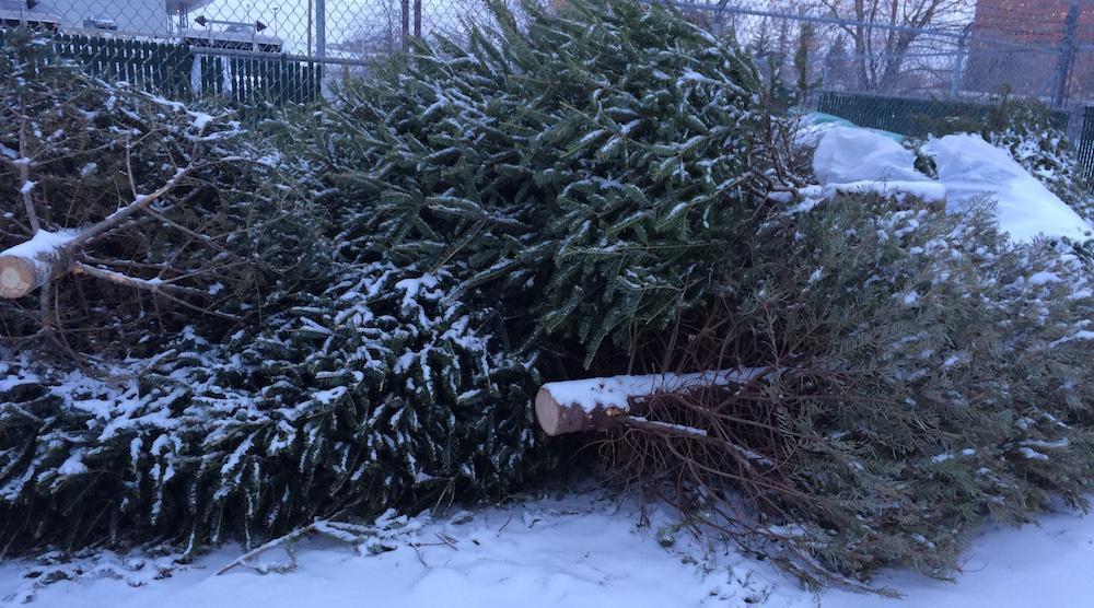 City of Calgary changes Christmas tree recycling program