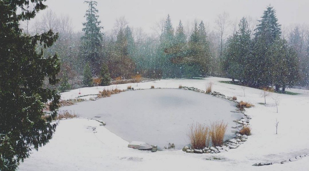 Snow falls in Fraser Valley and eastern areas of Metro Vancouver (PHOTOS)