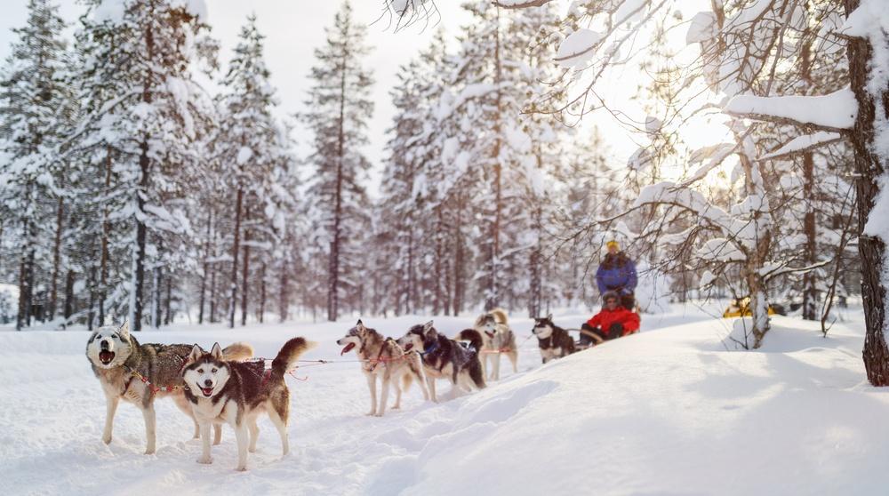 Dog sledding shutterstock