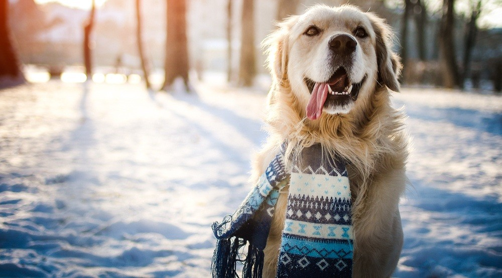 Dog in snow shutterstock