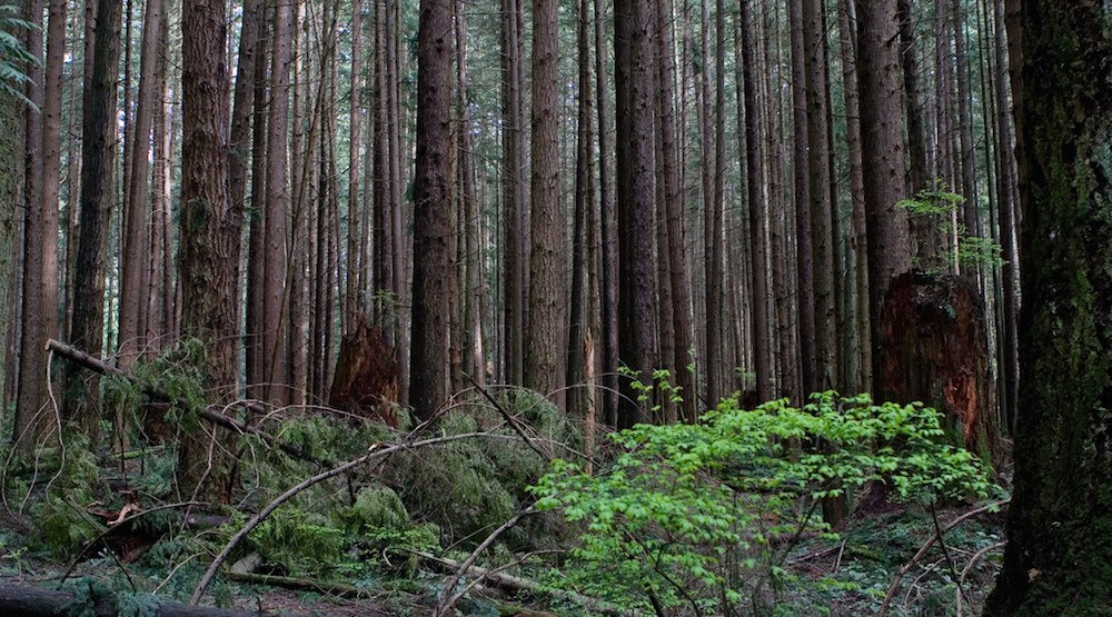 Pacific Spirit Regional Park in Vancouver (Bill Stillwell/Flickr)