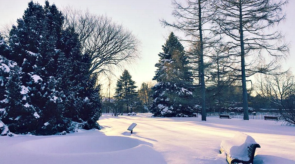 You can go cross country skiing at the Montreal Botanical Garden