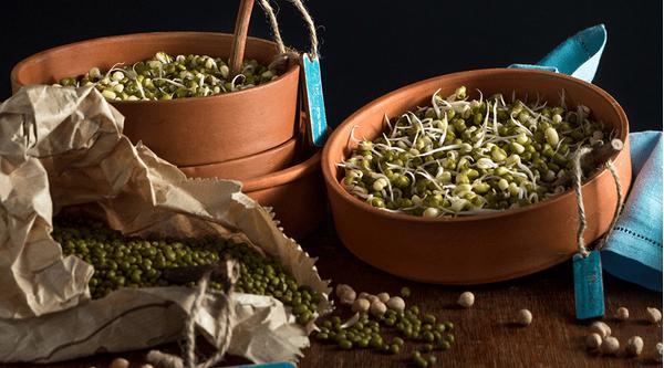 Mung bean sprouts chfa