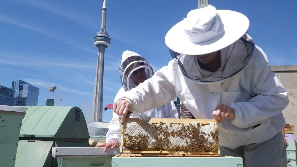 You can take an urban beekeeping class in Toronto next month