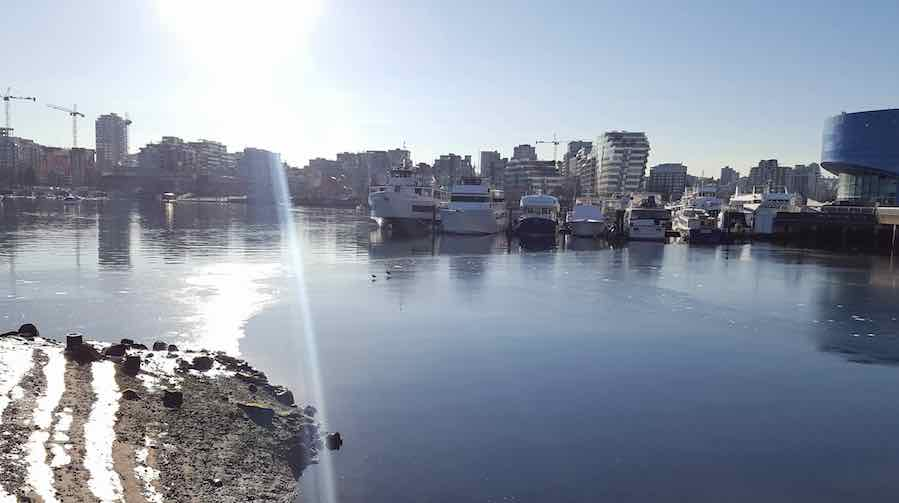 It's so cold that False Creek has started to freeze over (PHOTOS)