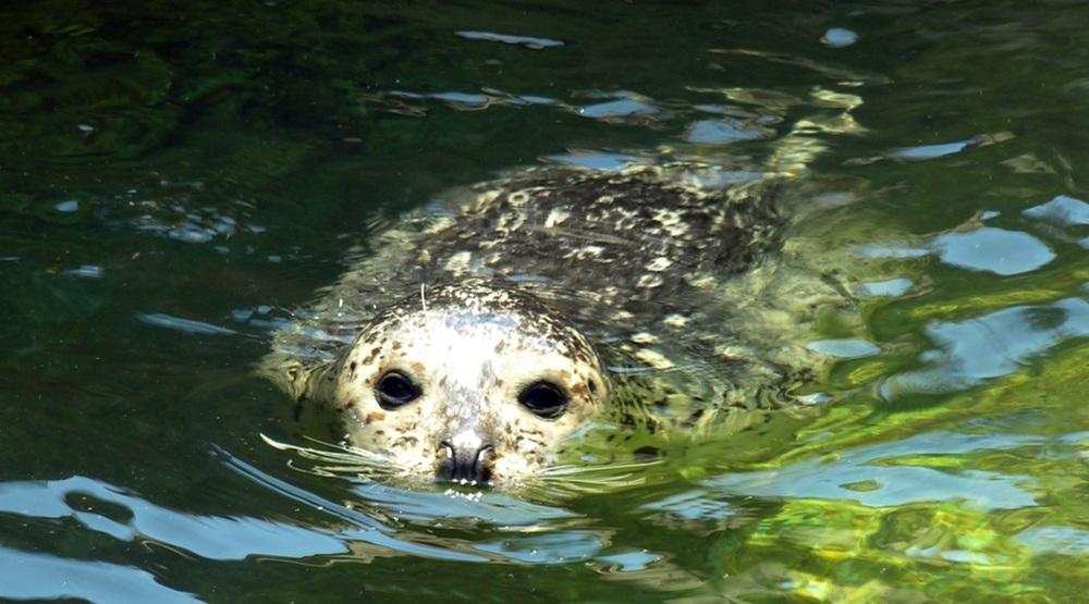 Vancouver Aquarium opens new hospital building at Marine Mammal Rescue Centre