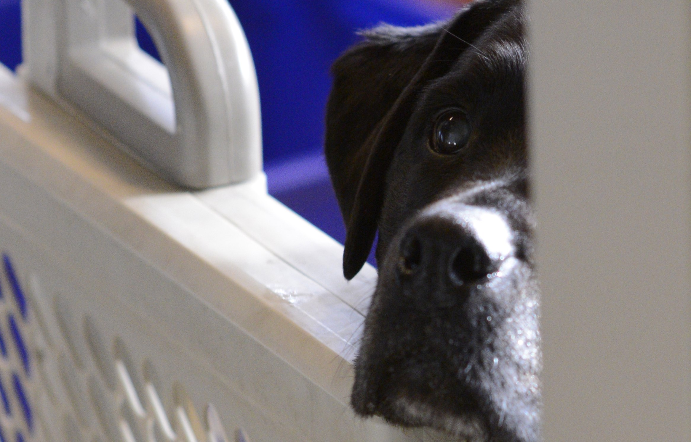 Adopt Me: Dog found wandering East Van needs a home