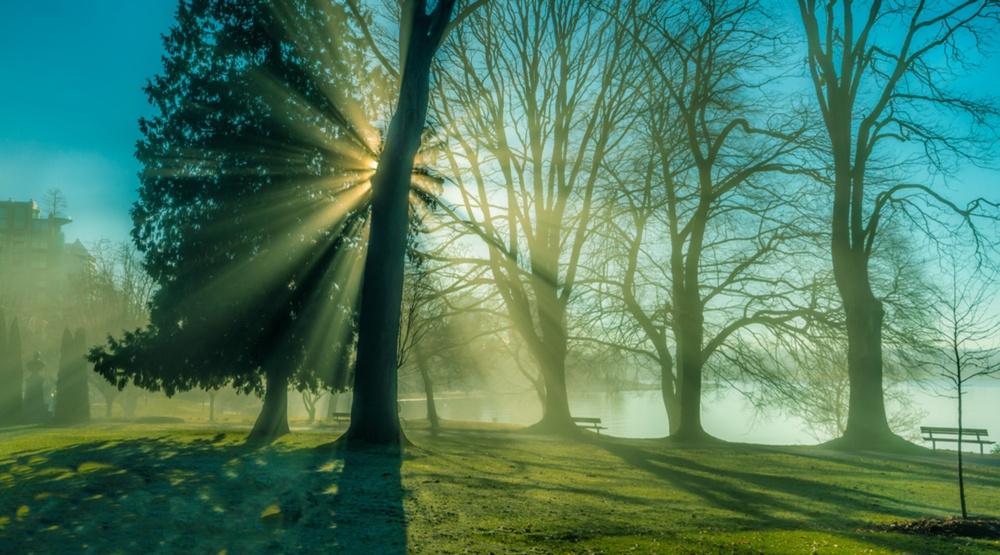 Stanley Park in the mist (Zhenwang Wang/Shutterstock)
