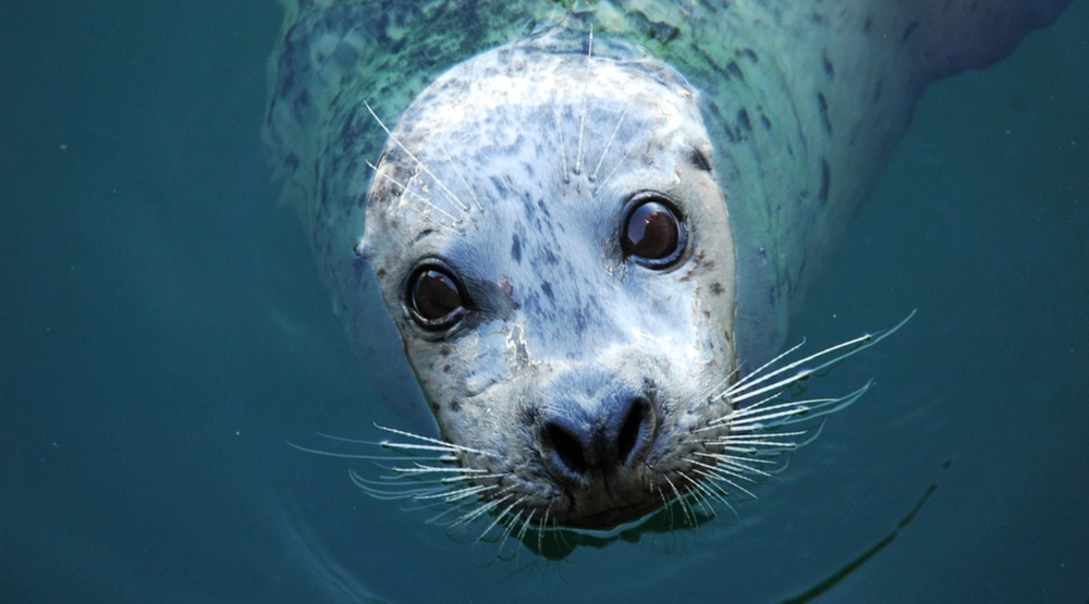 """PETA plans """"bloody"""" protest outside Vancouver restaurant using seal meat"""