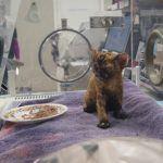 Slip, recovering in an incubator (SPCA)