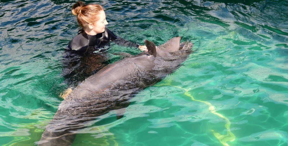 Vancouver Aquarium cetacean ban could mean euthanizing whales and dolphins
