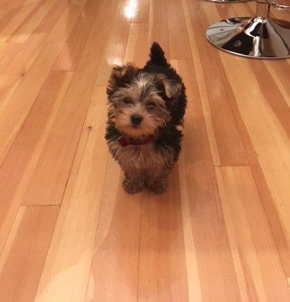 Ben the puppy 2 barbara siquiera