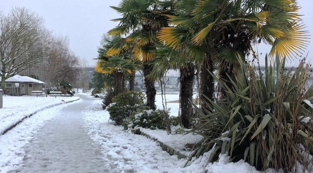 Vancouver english bay snow snowfall palm trees