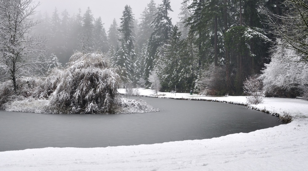 10 things to do in Burnaby in February