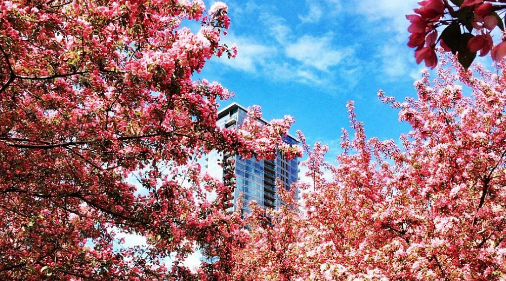 28 photos to get you excited for Spring in Montreal