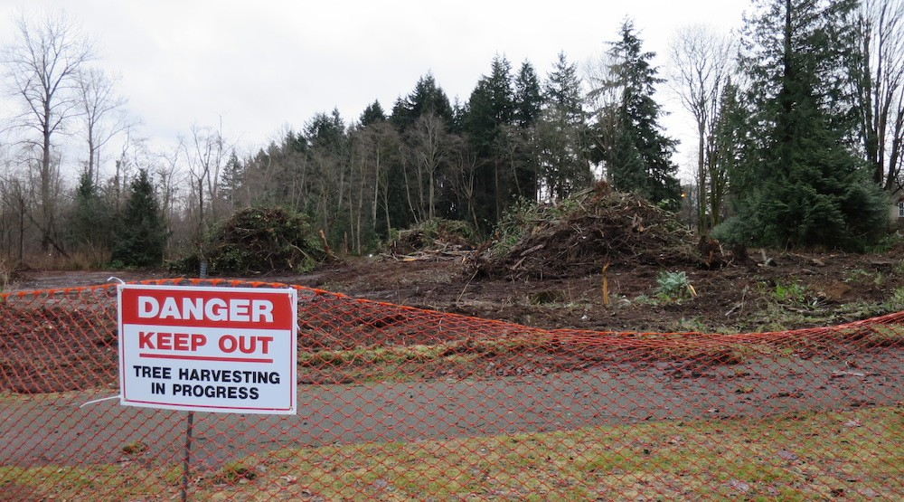 First Nation cutting down 21 acres of trees in UBC Pacific Spirit Park for condo towers