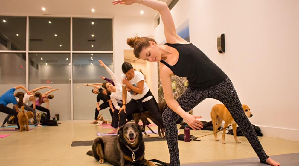 You Can Do Free Doga That S Dog Yoga In Toronto Tonight Listed