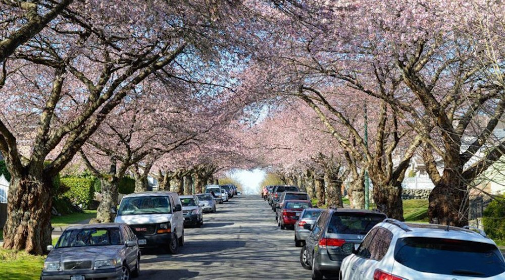 Celebrate spring during the Vancouver Cherry Blossom Festival 2017