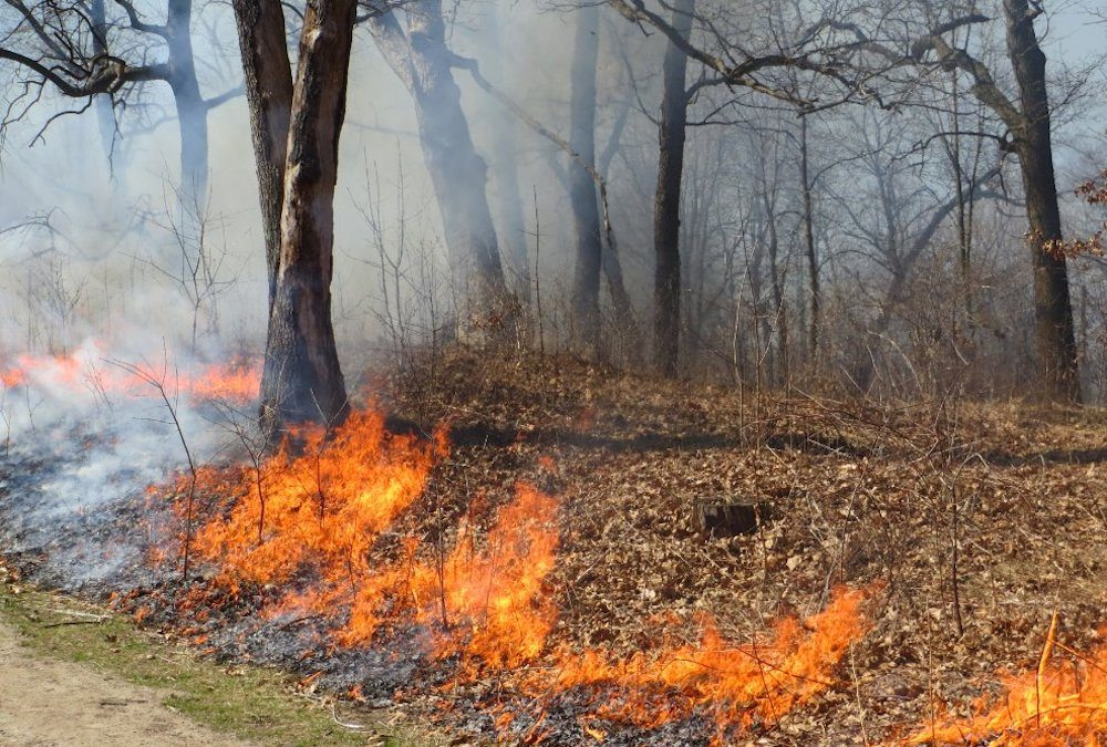 High Park to receive a controlled burn this spring