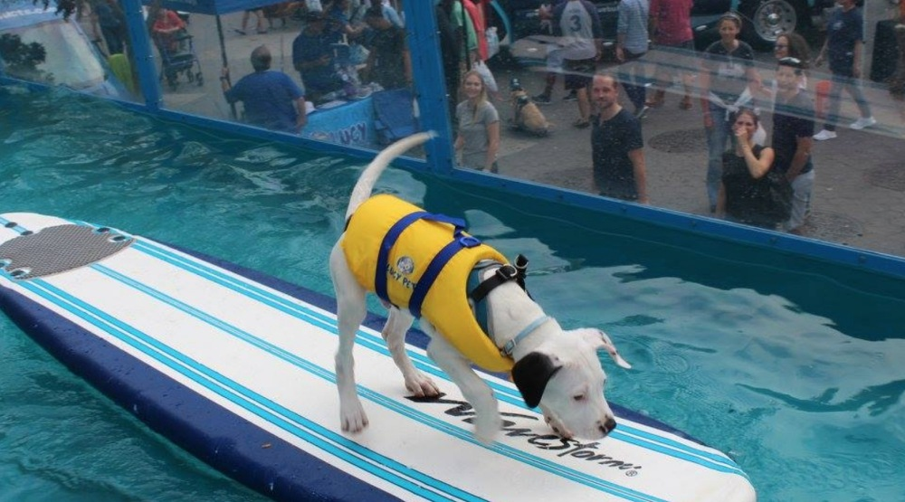 Free surfing for dogs is coming to Woofstock this May (VIDEO)