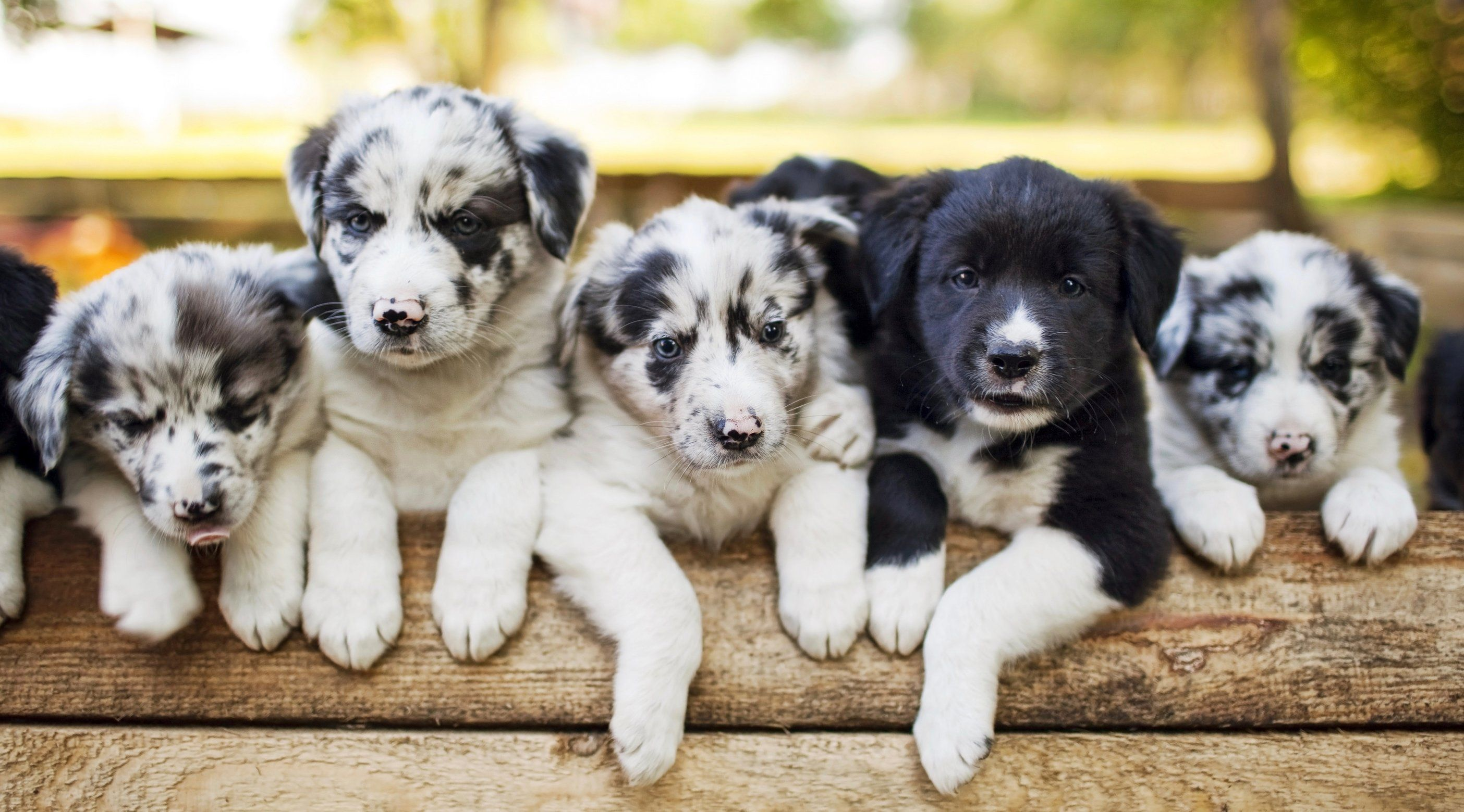 You can surprise your friends with a puppy delivery in Toronto next week