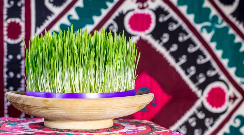 Nowrouz wheatgrass