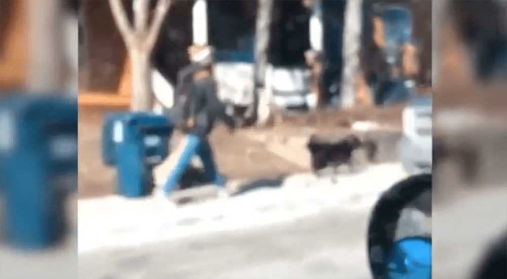 OSPCA will investigate Toronto dog walker who was caught mistreating dog on video