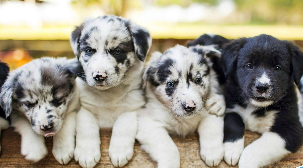 Preparing for puppy: 5 tips for bringing home a new furry family member