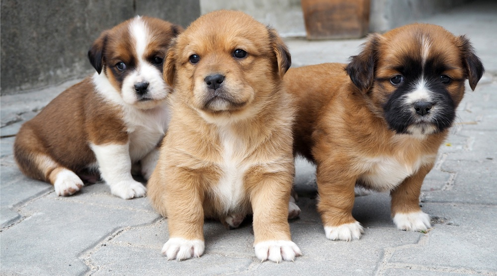 Celebrate your pooch for National Puppy Day