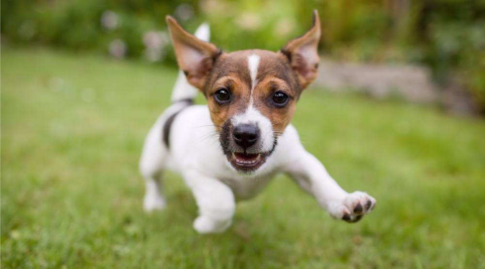 Puppy bastiaan schuitshutterstock