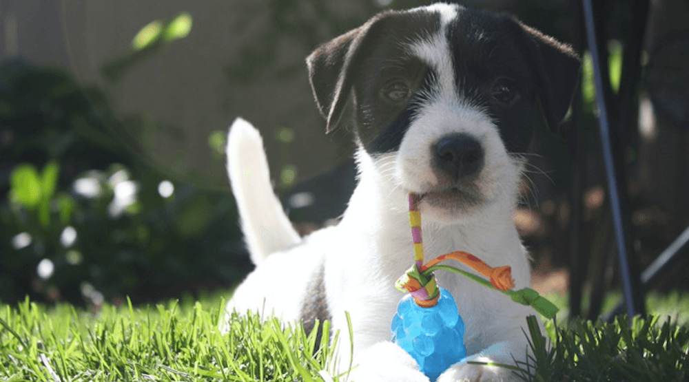 Vancouver's 26 best puppies on National Puppy Day (PHOTOS)