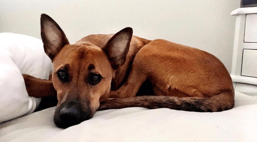 Rescue Me: Stella the Mexi-mutt