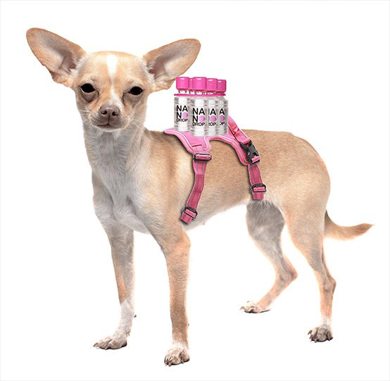 NanoDrop dog carrier (NanoDrop)