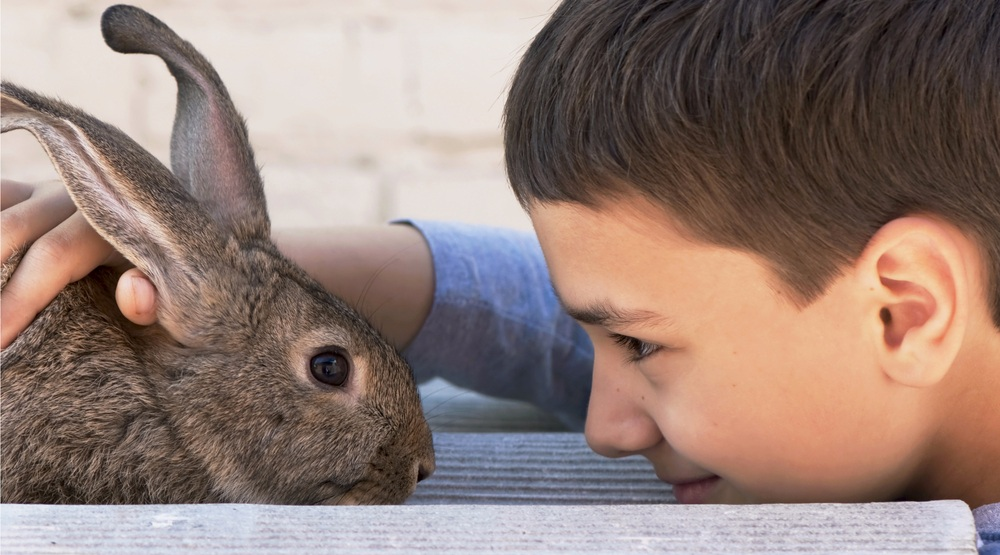 A boy and his rabbit (Aprilphoto/Shutterstock)