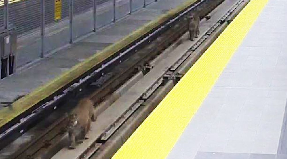 Skytrain inlet centre station cougars 1