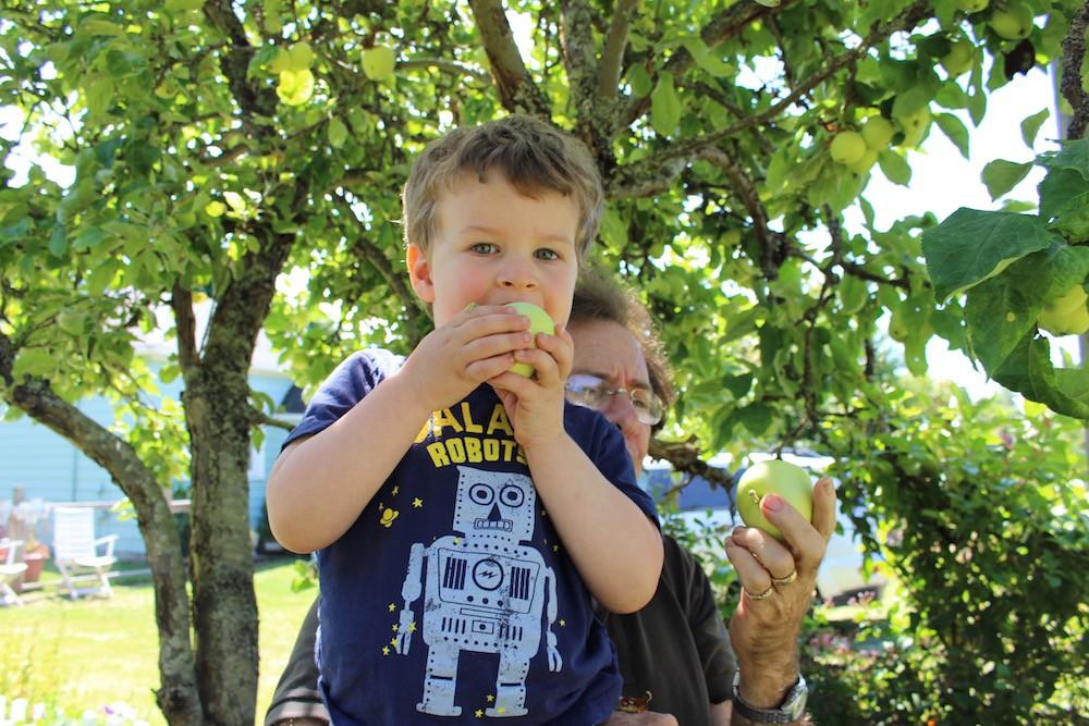 Kid Eating Apples